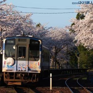 桜の駅の朝(能登鹿島駅にて)