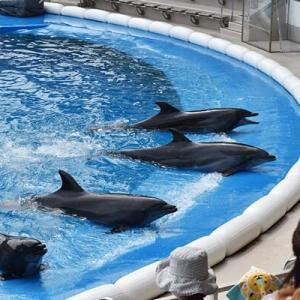 【7/23~】仙台うみの杜水族館「うみの杜サマー'20」開催!好評のナイトアクアリウムも