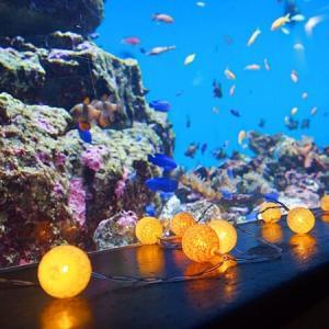 【2020】仙台うみの杜水族館「ナイトアクアリウム」開催!幻想的な夜の水族館を満喫