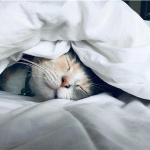 二度寝は◯分までが気持ち良いょ♫