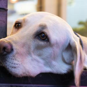 犬の『しつけ』『育て方』は、初めて飼育する方へ、知っていてほしい事なのです。