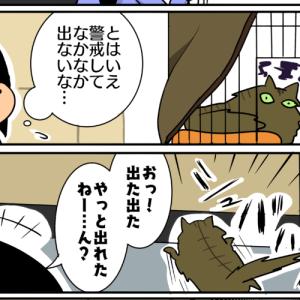 家に来たての保護猫あるある