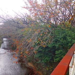 秋バラです♪♪