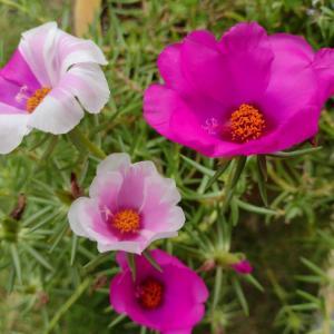 夏花の有終の美
