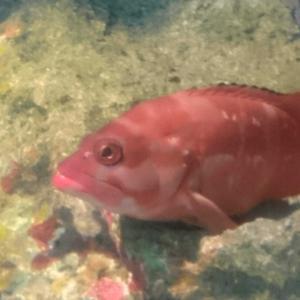 魚を学べる場所…そこは!?