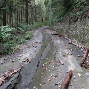 陣見山(埼玉県)に見る台風19号の爪痕