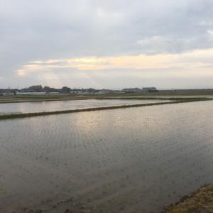 朝晩雨降る、田植え盛り