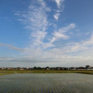 晴れて気温上昇、初夏の福島潟