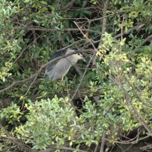 水辺の鳥たち