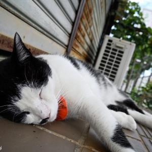 道端で寝る猫