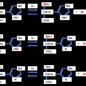アミノ酸の滴定(2) ―レビ法の適用―