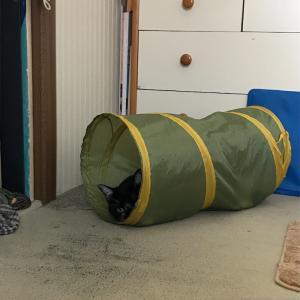 トンネルに猫