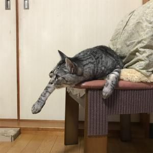 テレビ鑑賞