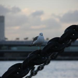 【独り言】野鳥からのメッセージ?ステイホームではなく#外へ出よう!
