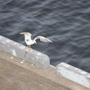 横浜港で羽を伸ばす?