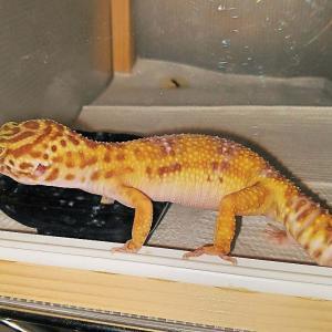 爬虫類たちの「昼」と「夜」の行動