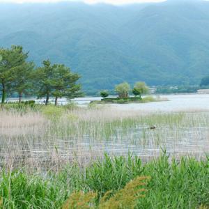 番外  河口湖→下部→早川 野鳥探索の旅 ①