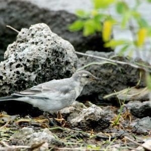 2819.  河口湖の野鳥たち / 河口湖→下部→早川 野鳥探索の旅 ③