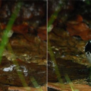 2833.  シジュウカラの水浴び / 河口湖→下部→早川 野鳥探索の旅 ⑦