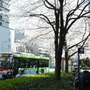 3042.  東急エルガ と 御成門の桜