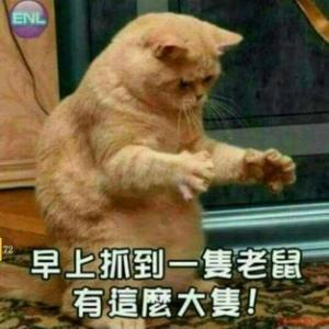 爆笑 猫たちの世界