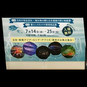 【あべのハルカス】世界の淡水・海水魚展[7月14日(水)→25日(日)]