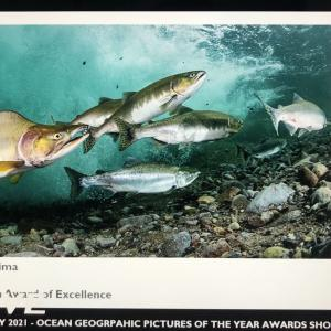 Ocean Geographic Picture of the year Competition 2021で1位