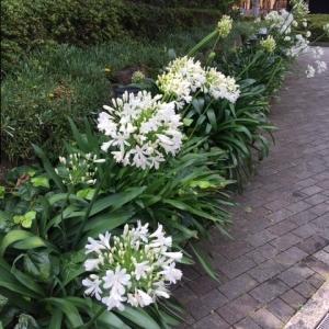 公園に咲く梅雨時の花