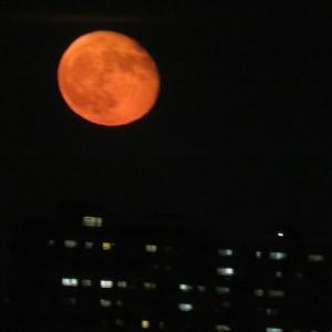 真っ赤な月が顔を見せました。