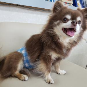 体重含め愛犬チェック(^^)b