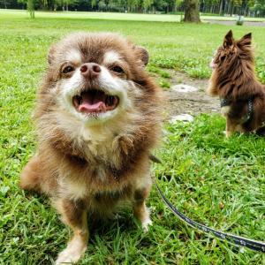 久々の公園と膿皮症