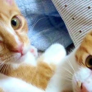 妻の希望で猫を飼う・・・その理由は?