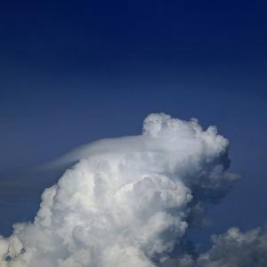 続々・白頭巾ちゃん気をつけて ── 梅雨明け日記七月二十九日(木)