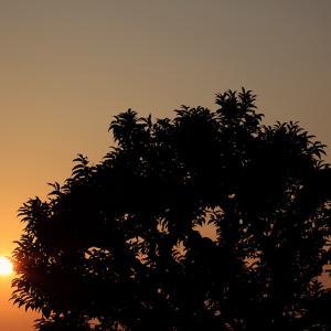 天使が通る時 ── 残夏日記 令和三年九月二十三日(木)