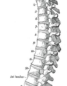 腰痛予防のための腰の使い方