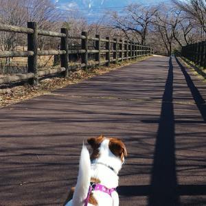 あったか田貫湖一周散歩