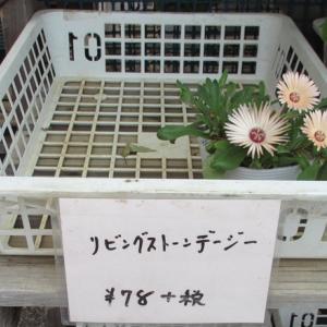 お花を買って来ました