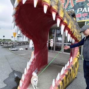 恐竜の歯の大きさとおなじくらいの僕・・・( *´艸`)