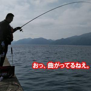 大型魚出現!ぽっぽっぽ~、は~とぽっぽ~♫