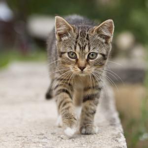 釣りブログで猫ちゃんの話しとはこれいかに。思わず119番しちまった。