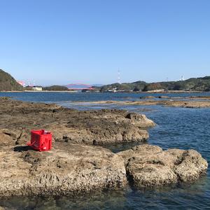 長崎県西海エリアと生月エリアの釣果状況。