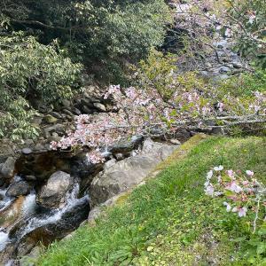 桜の散り際、山間の農家レストランでランチ。