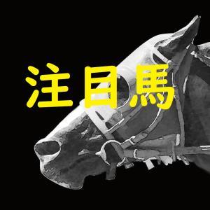 【菊花賞】注目馬