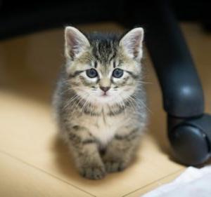 「猫好きの方へ 【猫レクション】開催~北海道」