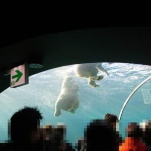 「札幌円山動物園で閉園中に毎日、動物の動画をツイッターで配信」