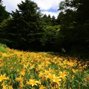 「六甲高山植物園 見頃の花」