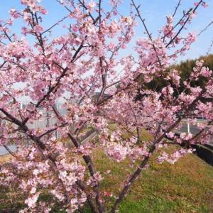 久米八幡宮・板井熊野座神社・碧巖寺までポタリング