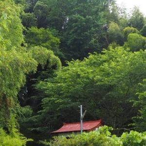 栗崎の天神樟(県指定天然記念物)