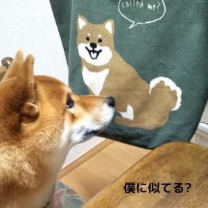 柴犬日記 (vol.363)