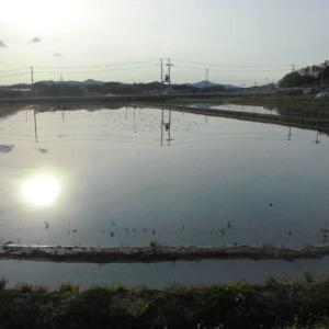 大雨の後に代田の散歩道